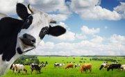 Сельскохозяйственная перепись как объективный показатель экономики страны