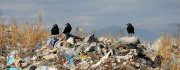 Полигон для мусора: необходимо взвешенное решение