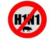 H1N1 – опасный грипп из Грузии или в Год Свиньи наши соседи могут подложить нам свинью