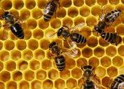 Пчелы как объект инвестиций