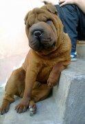 Человек собаке друг или гав-граждане Цхинвала